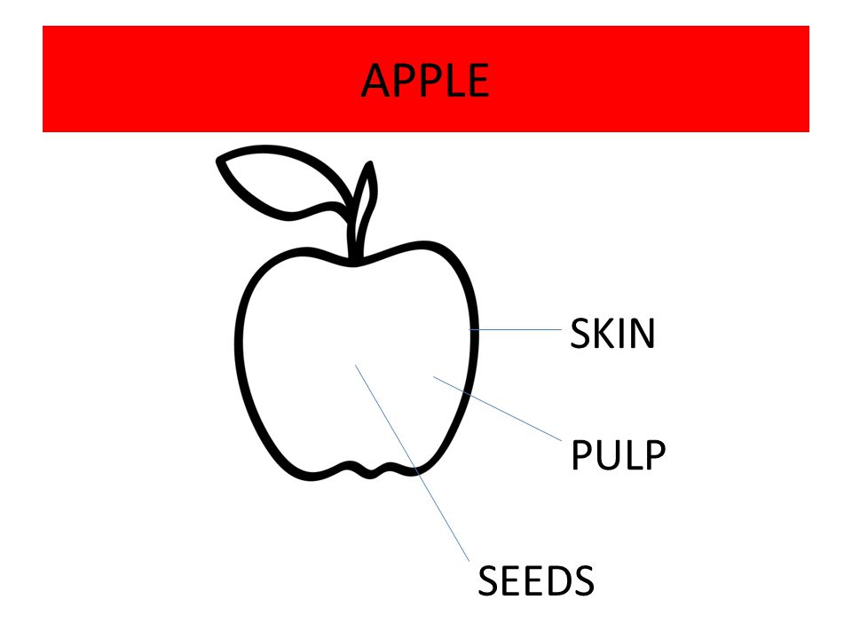 APPLE SKIN PULP SEEDS