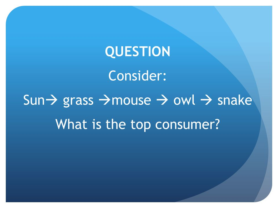 QUESTION Consider: Sun  grass  mouse  owl  snake What is the top consumer?