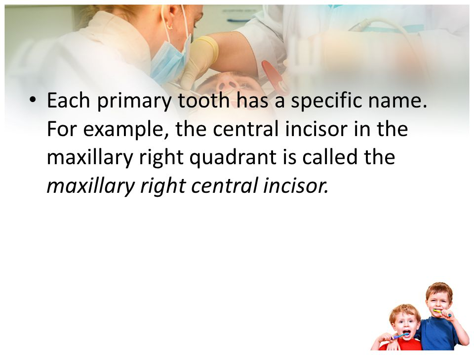 To name the primary teeth, the mouth is divided into quadrants or four sections: Maxillary right, maxillary left Mandibular right, mandibular left The
