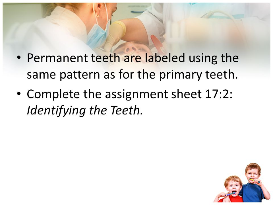 Permanent, or succedaneous, teeth Thirty two permanent teeth: 16 upper and 16 lower. For the maxillary and mandibular teeth, there are: Two central in