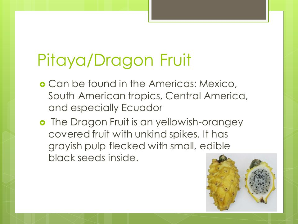 Pitaya/Dragon Fruit  Can be found in the Americas: Mexico, South American tropics, Central America, and especially Ecuador  The Dragon Fruit is an y