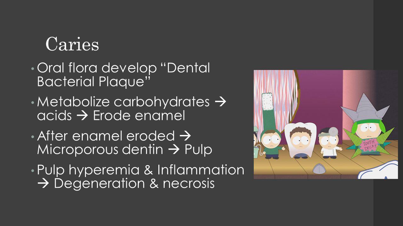 "Caries Oral flora develop ""Dental Bacterial Plaque"" Metabolize carbohydrates  acids  Erode enamel After enamel eroded  Microporous dentin  Pulp Pu"