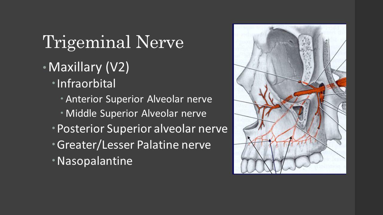 Trigeminal Nerve Maxillary (V2)  Infraorbital  Anterior Superior Alveolar nerve  Middle Superior Alveolar nerve  Posterior Superior alveolar nerve