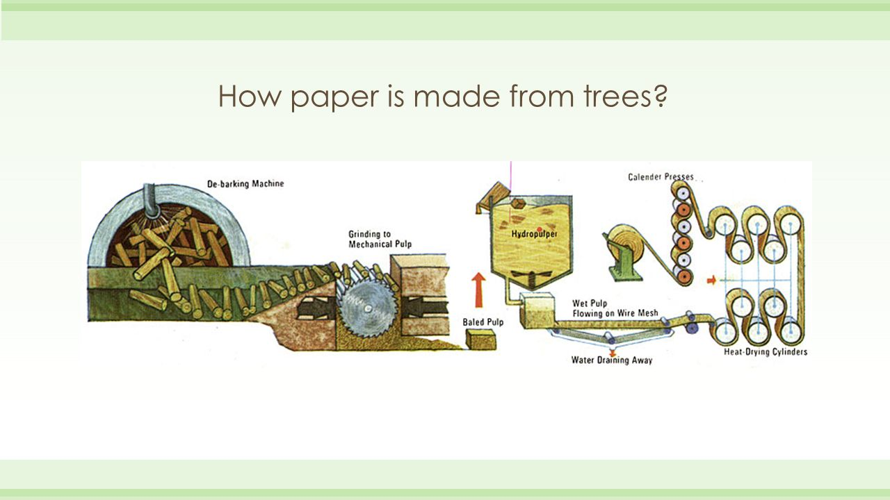 How paper is made from trees?