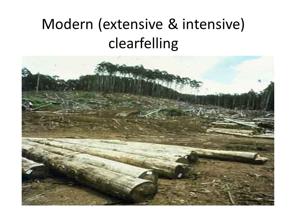 Modern (extensive & intensive) clearfelling