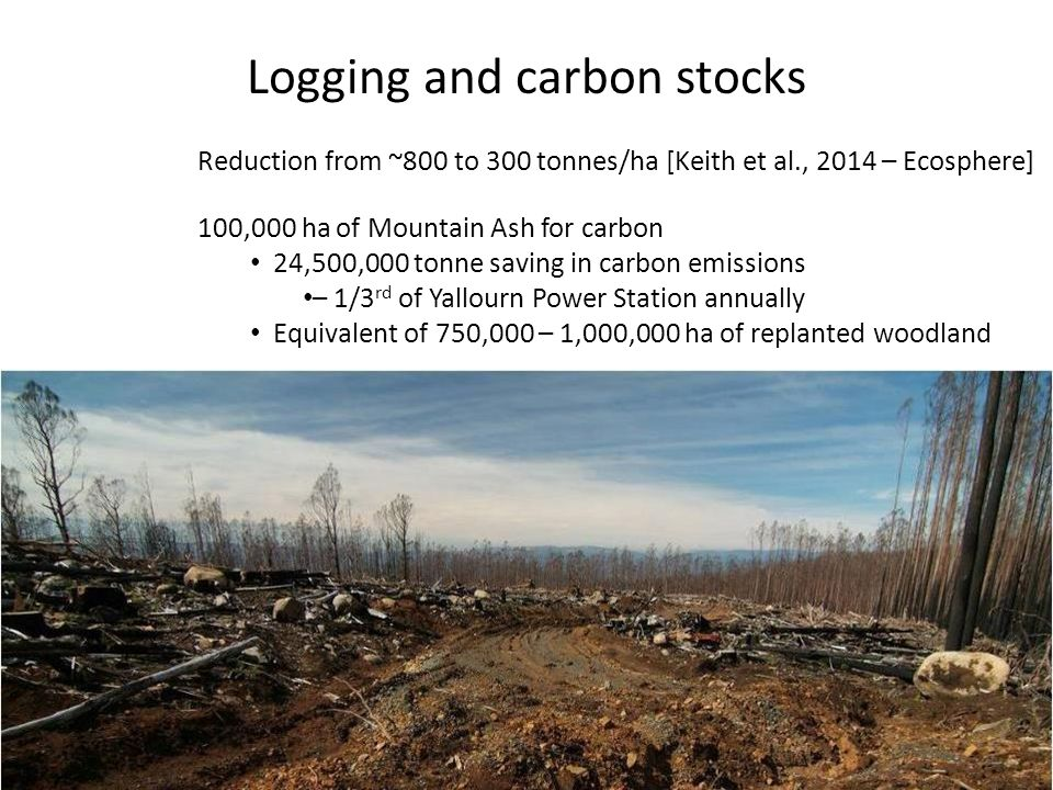 Logging and carbon stocks Reduction from ~800 to 300 tonnes/ha [Keith et al., 2014 – Ecosphere] 100,000 ha of Mountain Ash for carbon 24,500,000 tonne