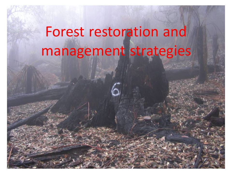 Forest restoration and management strategies