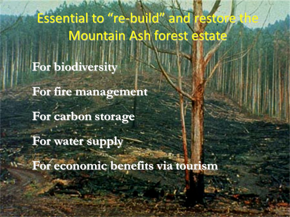 "Essential to ""re-build"" and restore the Mountain Ash forest estate For biodiversity For fire management For carbon storage For water supply For econom"