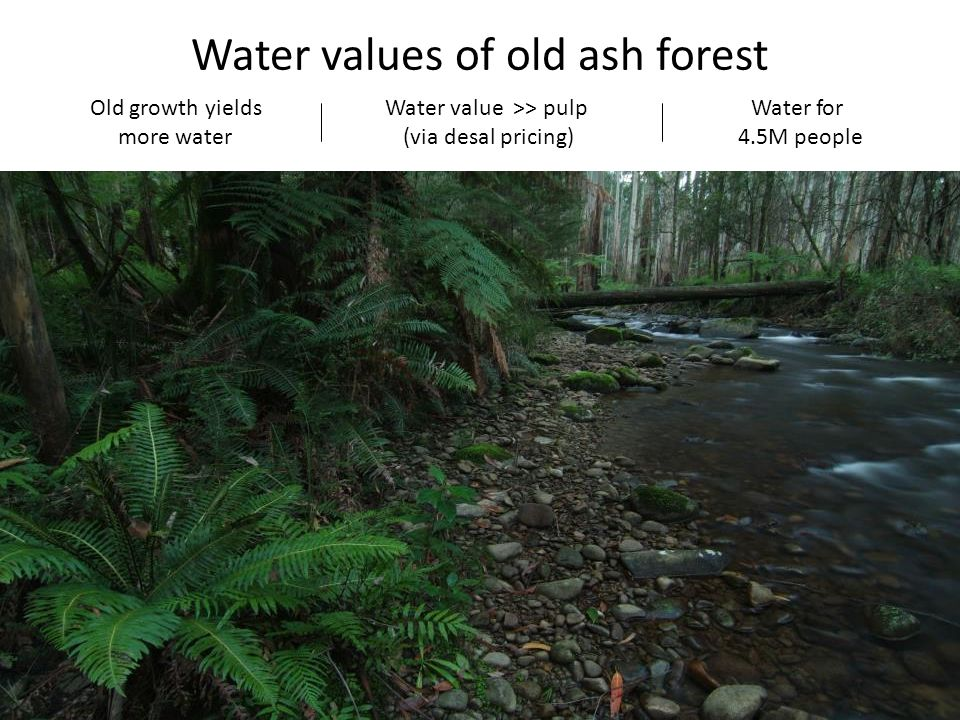 Water values of old ash forest Old growth yields more water Water value >> pulp (via desal pricing) Water for 4.5M people