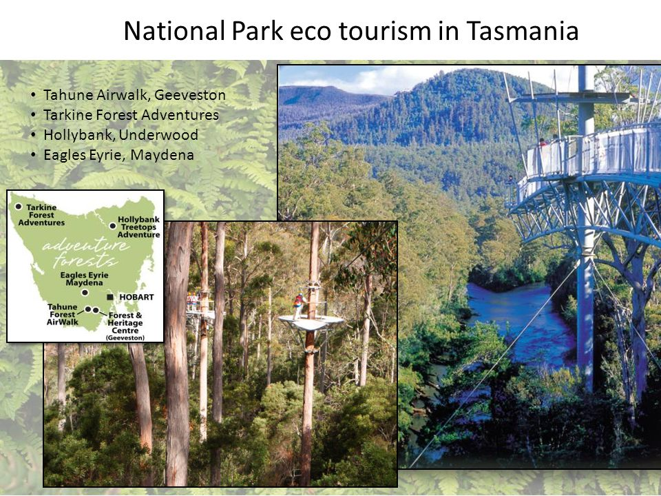 Tahune Airwalk, Geeveston Tarkine Forest Adventures Hollybank, Underwood Eagles Eyrie, Maydena National Park eco tourism in Tasmania