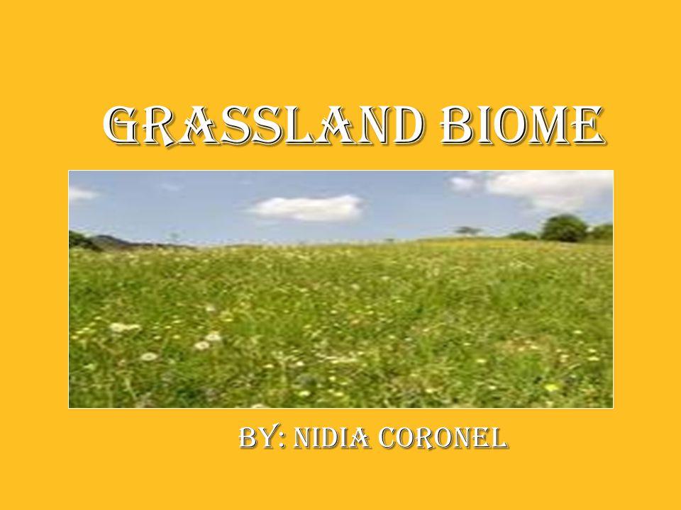 Grassland Biome Grassland Biome By: nIDIA coronel By: nIDIA coronel