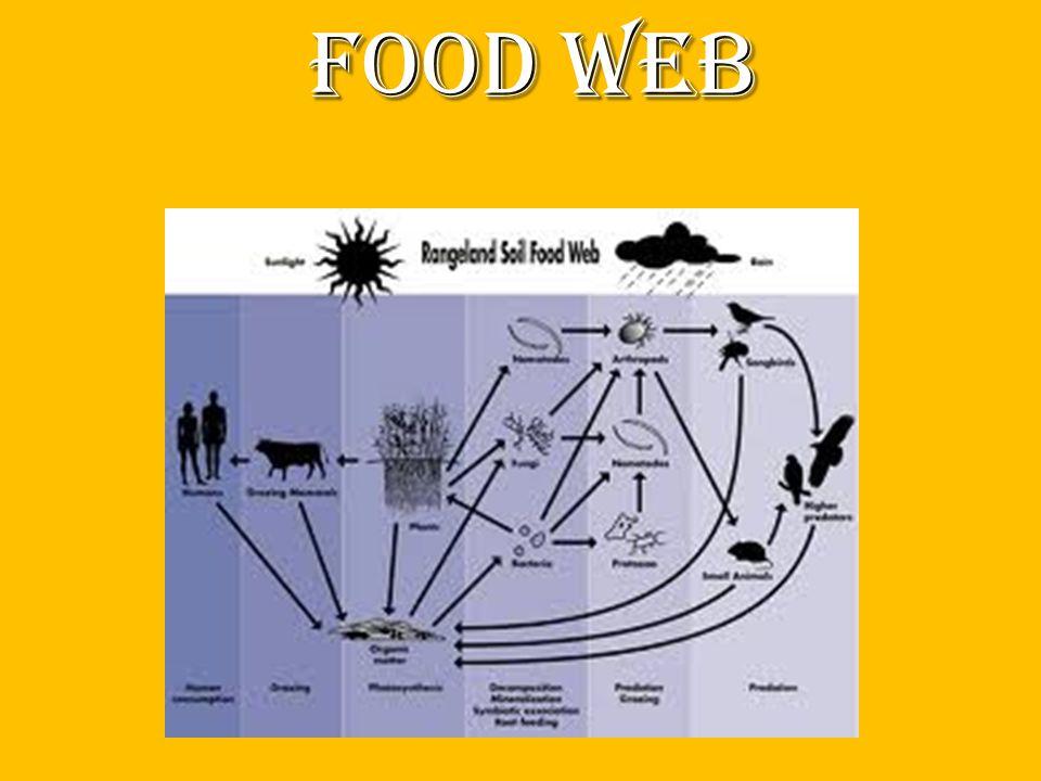 Food web food web food web