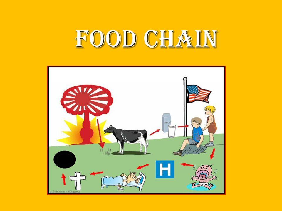 food chain food chain
