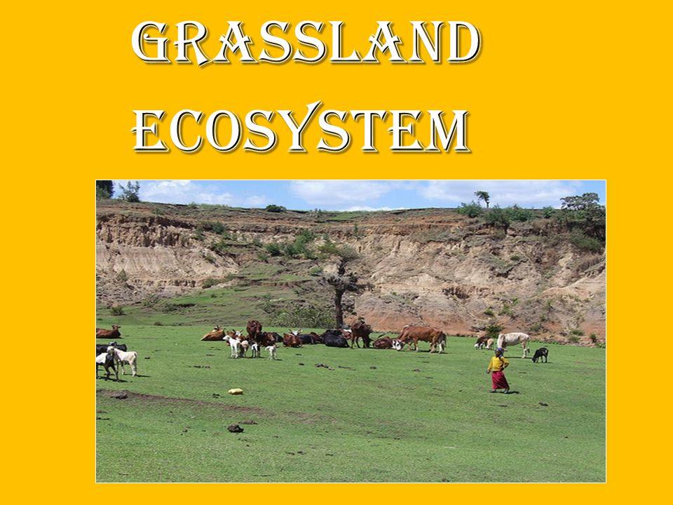 Grassland Grassland ecosystem ecosystem