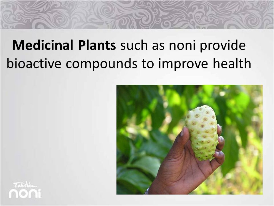 Medicinal Plants such as noni provide bioactive compounds to improve health