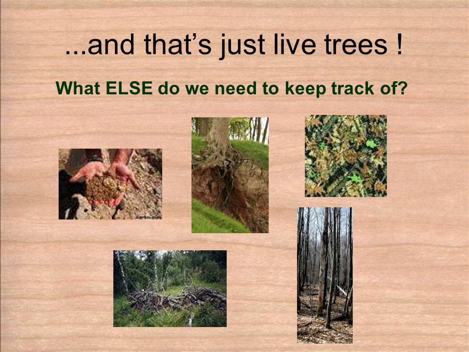 ...and that's just live trees ! What ELSE do we need to keep track of