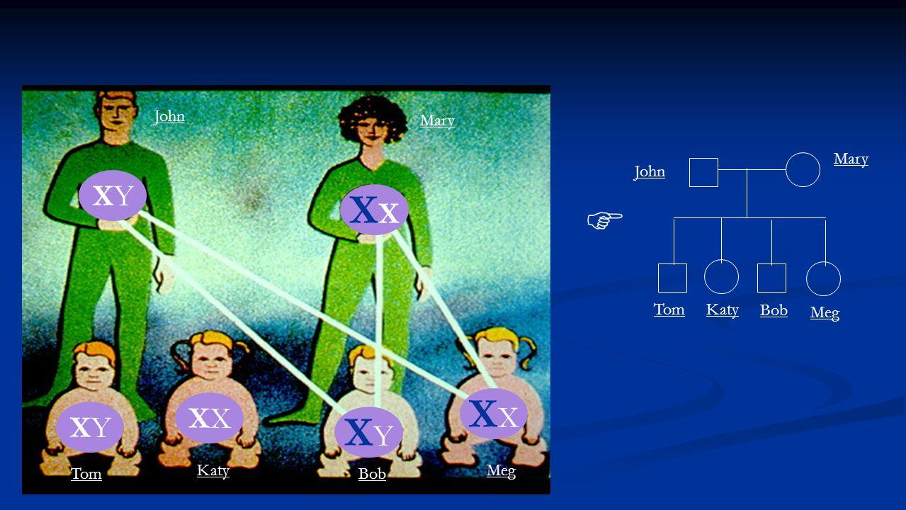 X XYXY XYXY X X XYXY John Mary Tom Katy Bob Meg John Mary Tom Katy Bob Meg 