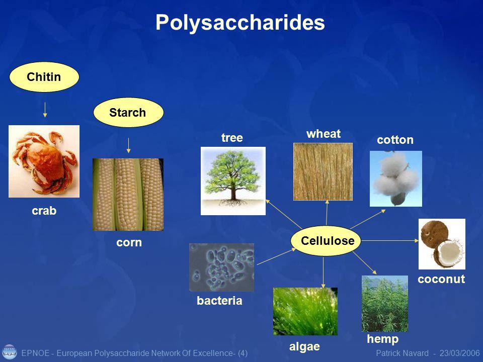 EPNOE - European Polysaccharide Network Of Excellence23/03/2006Patrick Navard -- (4) Polysaccharides Chitin coconut hemp bacteria algae Starch crab corn Cellulose cotton wheat tree