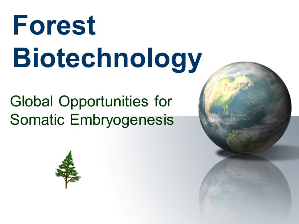Forest Biotechnology Global Opportunities for Somatic Embryogenesis