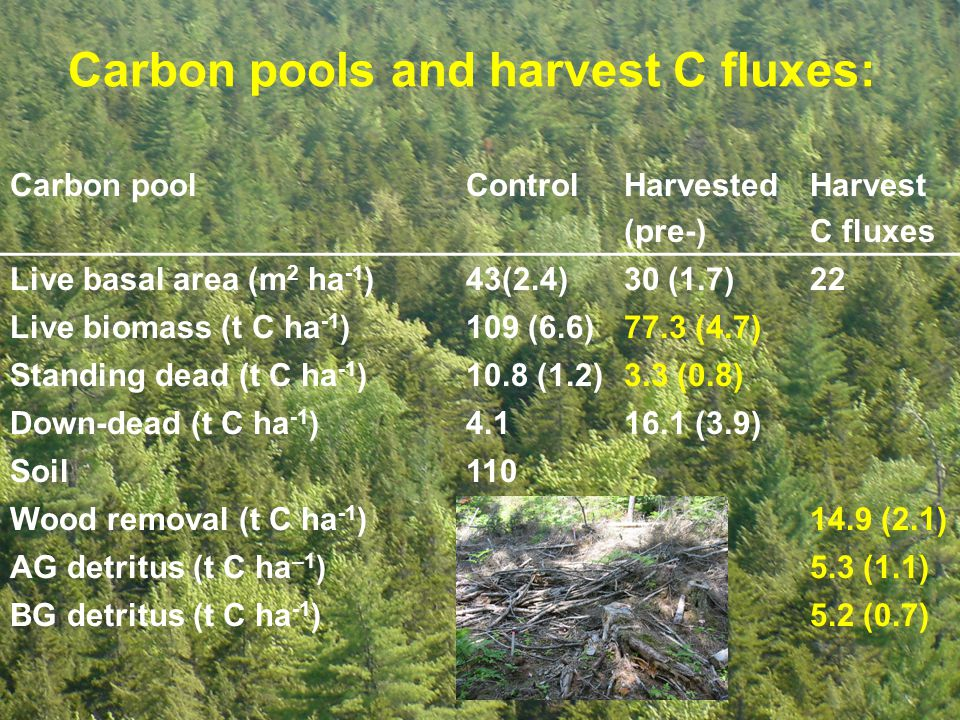 Carbon pools and harvest C fluxes: Carbon poolControlHarvested (pre-) Harvest C fluxes Live basal area (m 2 ha -1 )43(2.4)30 (1.7)22 Live biomass (t C ha -1 )109 (6.6)77.3 (4.7) Standing dead (t C ha -1 )10.8 (1.2)3.3 (0.8) Down-dead (t C ha -1 )4.116.1 (3.9) Soil110 Wood removal (t C ha -1 )14.9 (2.1) AG detritus (t C ha –1 )5.3 (1.1) BG detritus (t C ha -1 )5.2 (0.7)