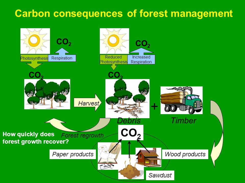 Debris Photosynthesis CO 2 Respiration CO 2 Reduced Photosynthesis CO 2 Increased Respiration CO 2 Timber + Wood products CO 2 Paper products Sawdust Harvest Forest regrowth Carbon consequences of forest management How quickly does forest growth recover