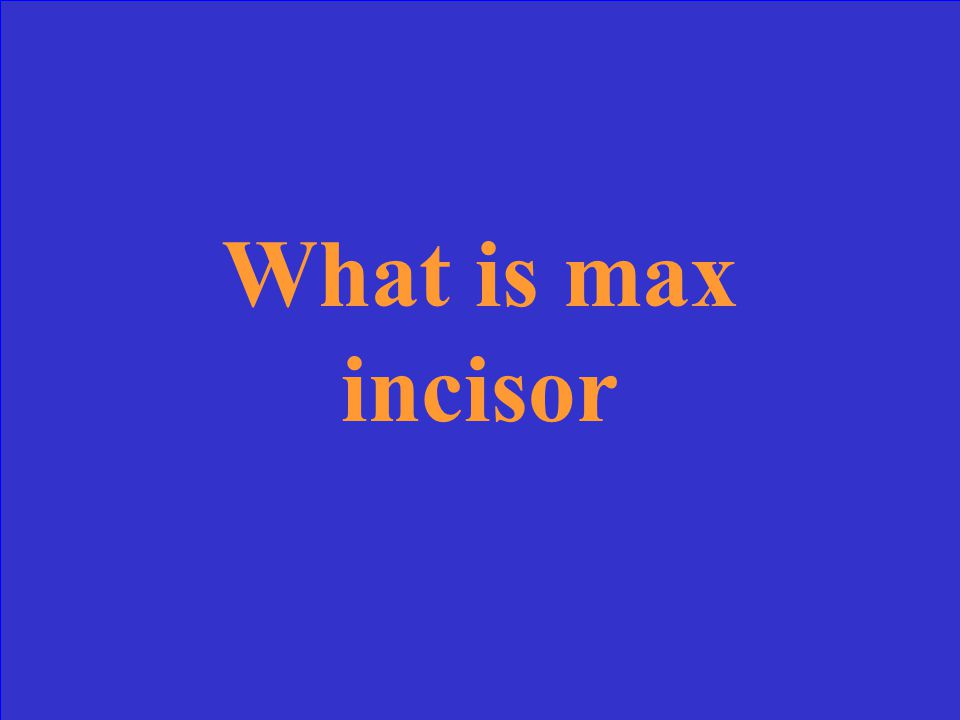 What is max incisor