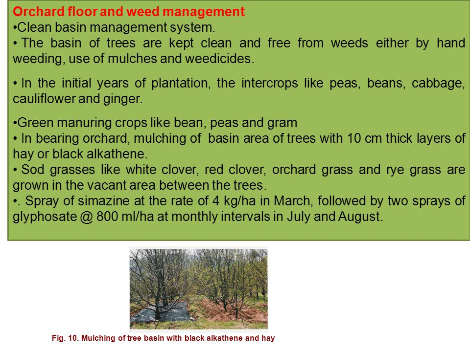 Orchard floor and weed management Clean basin management system.