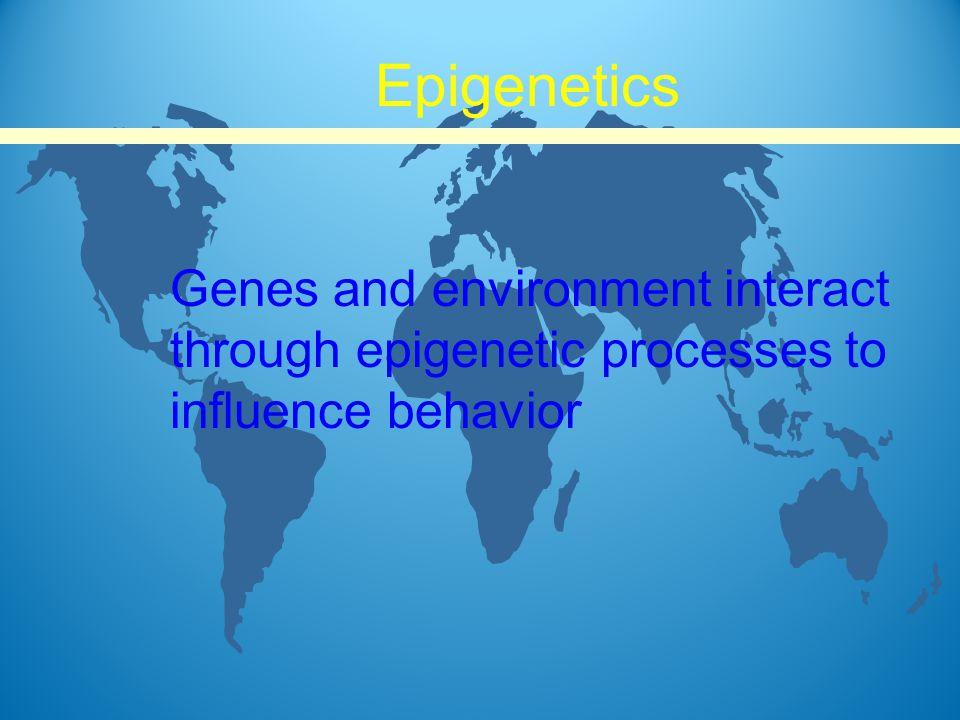 Genes and environment interact through epigenetic processes to influence behavior Epigenetics
