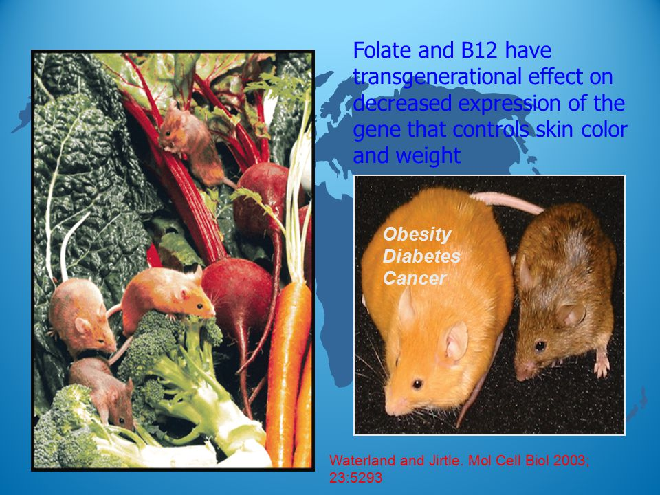 Folate and B12 have transgenerational effect on decreased expression of the gene that controls skin color and weight Obesity Diabetes Cancer Waterland and Jirtle.