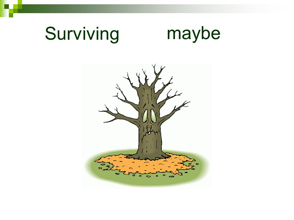 Surviving maybe