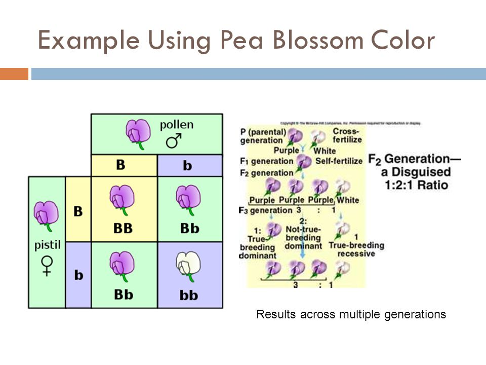 Example Using Pea Blossom Color Results across multiple generations