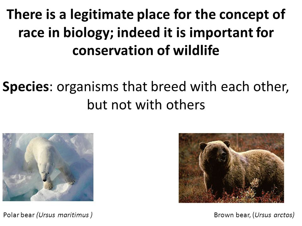 There is a legitimate place for the concept of race in biology; indeed it is important for conservation of wildlife Species: organisms that breed with each other, but not with others Polar bear (Ursus maritimus ) Brown bear, (Ursus arctos)