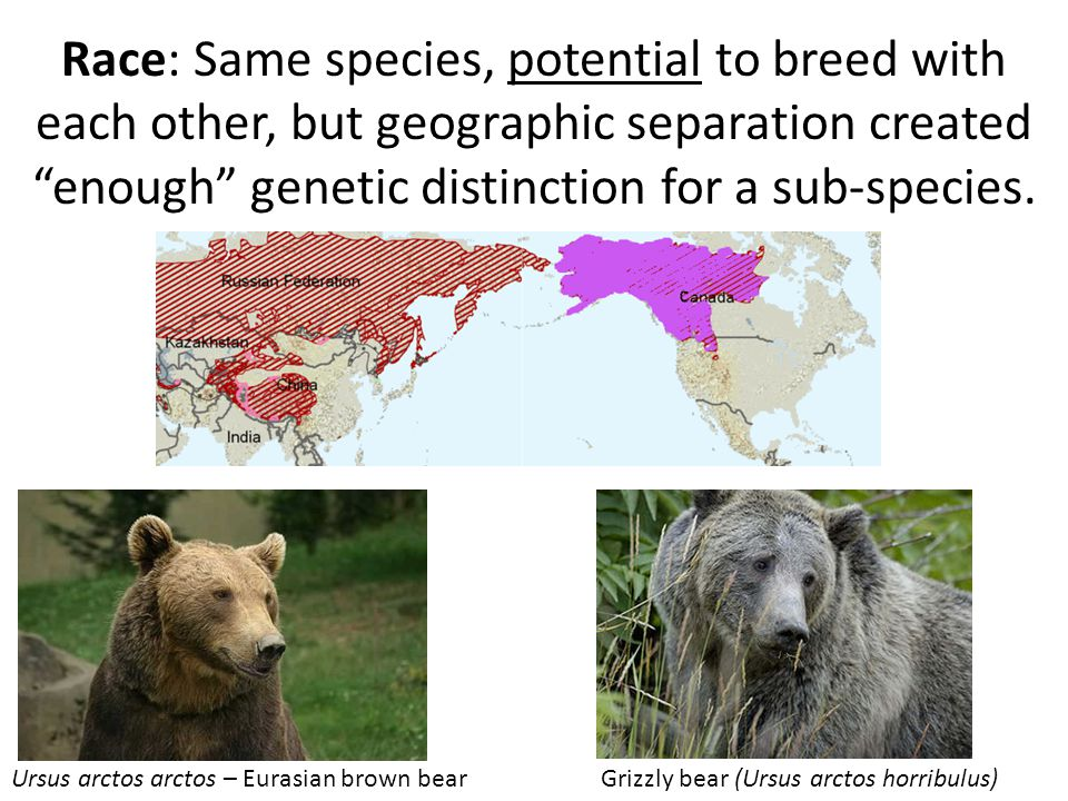 Race: Same species, potential to breed with each other, but geographic separation created enough genetic distinction for a sub-species.