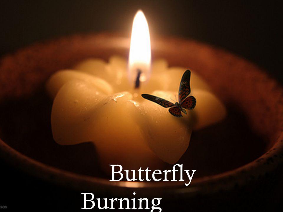 Butterfly Burnin Butterfly Burning By Yvonne Vera