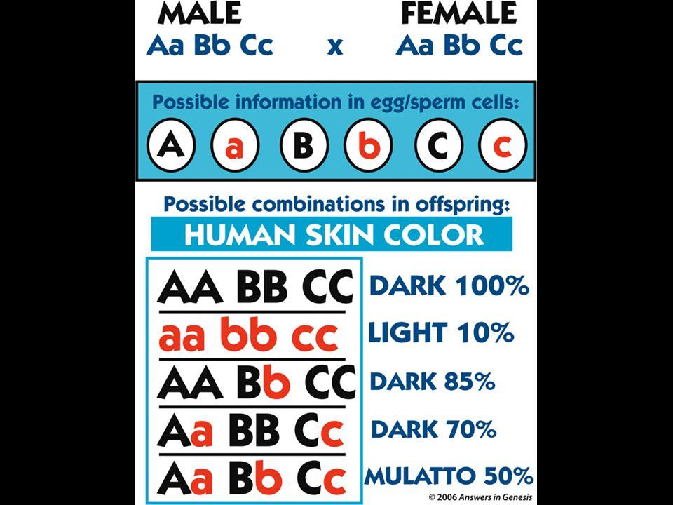Human Skin Variations 01458
