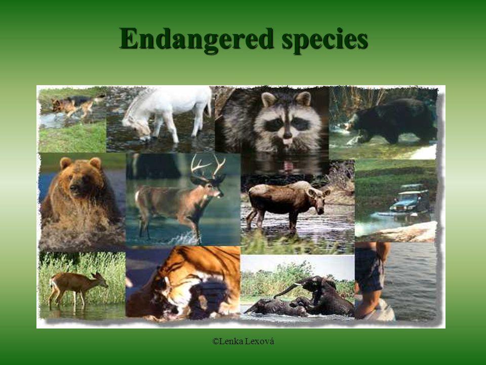 ©Lenka Lexová Endangered species