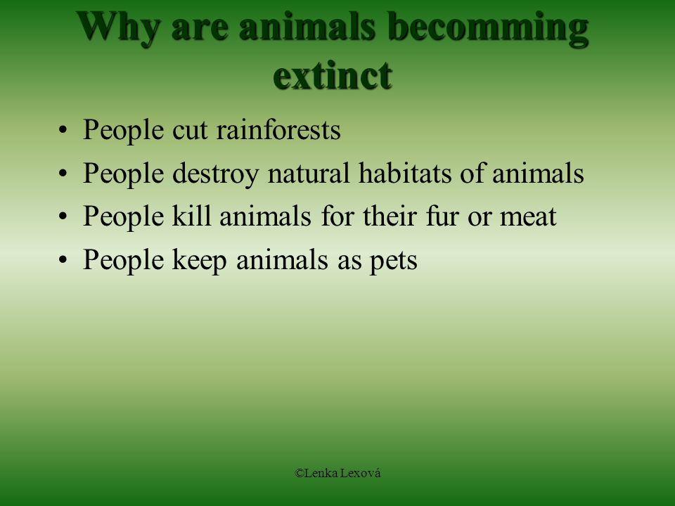 ©Lenka Lexová Why are animals becomming extinct People cut rainforests People destroy natural habitats of animals People kill animals for their fur or meat People keep animals as pets