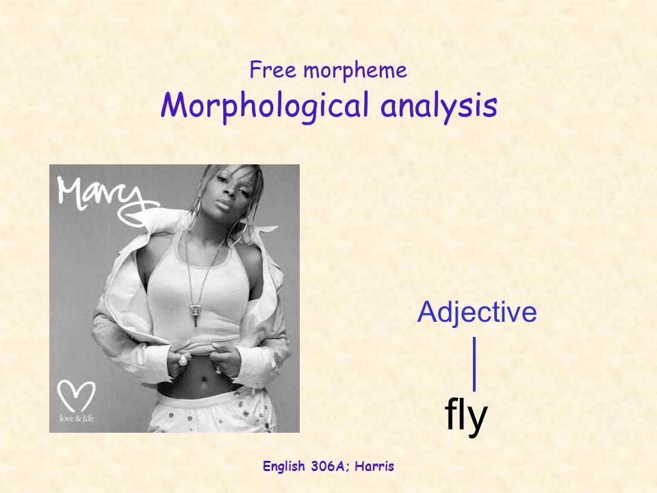 English 306A; Harris Free morpheme Morphological analysis Adjective fly