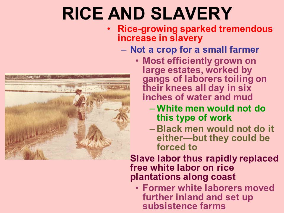 RICE AND SLAVERY Rice-growing sparked tremendous increase in slavery –Not a crop for a small farmer Most efficiently grown on large estates, worked by