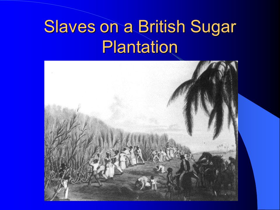 Slaves on a British Sugar Plantation