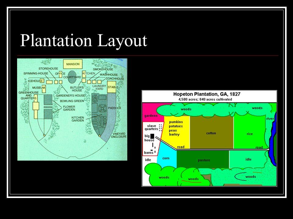 Plantation Layout
