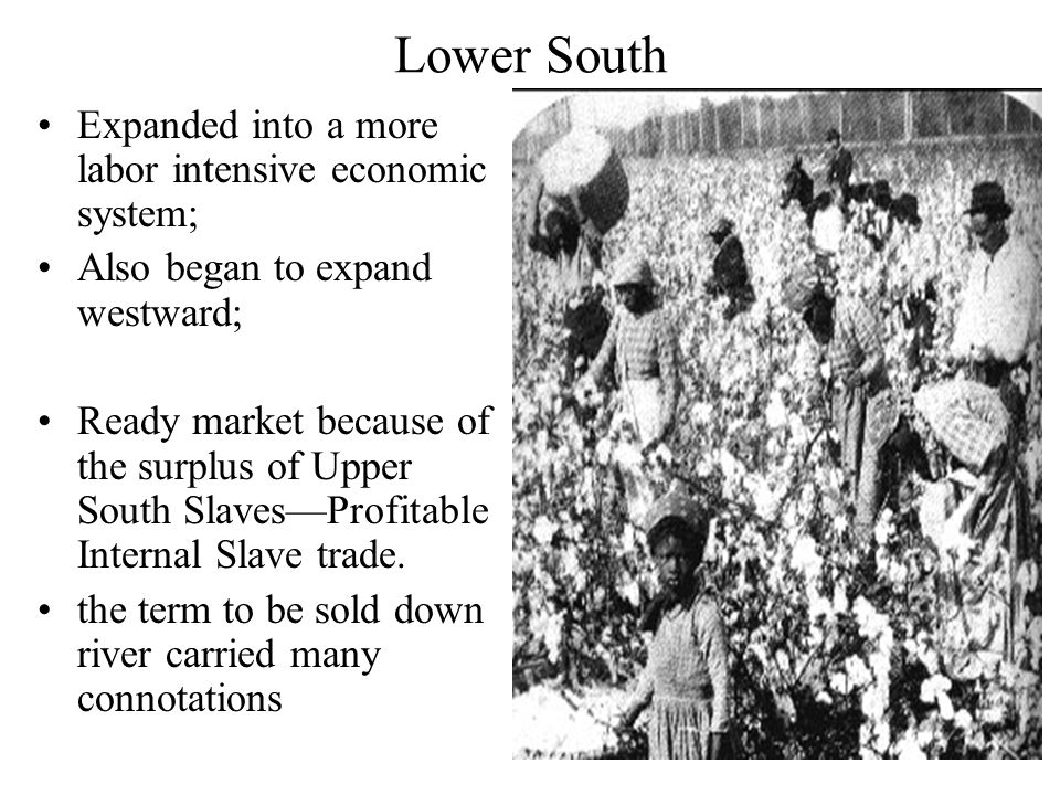 Lower South Expanded into a more labor intensive economic system; Also began to expand westward; Ready market because of the surplus of Upper South Slaves—Profitable Internal Slave trade.