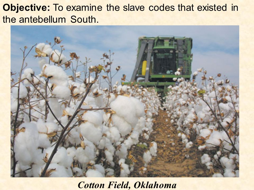 Objective: To examine the slave codes that existed in the antebellum South. Cotton Field, Oklahoma