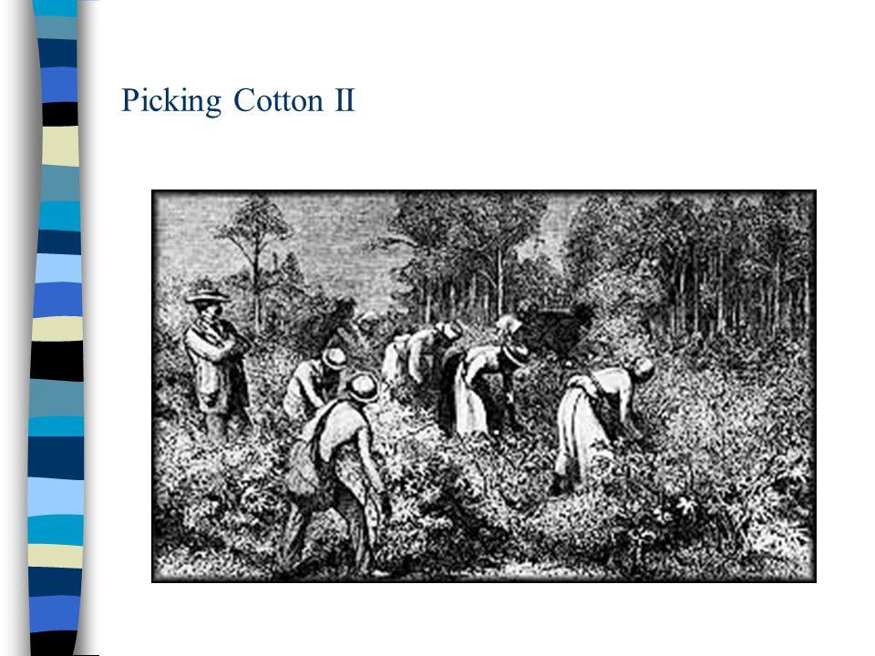 Picking Cotton II