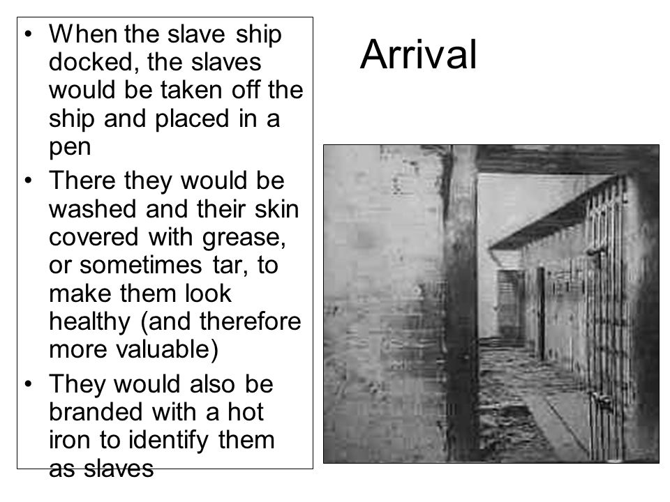 Arrival When the slave ship docked, the slaves would be taken off the ship and placed in a pen There they would be washed and their skin covered with