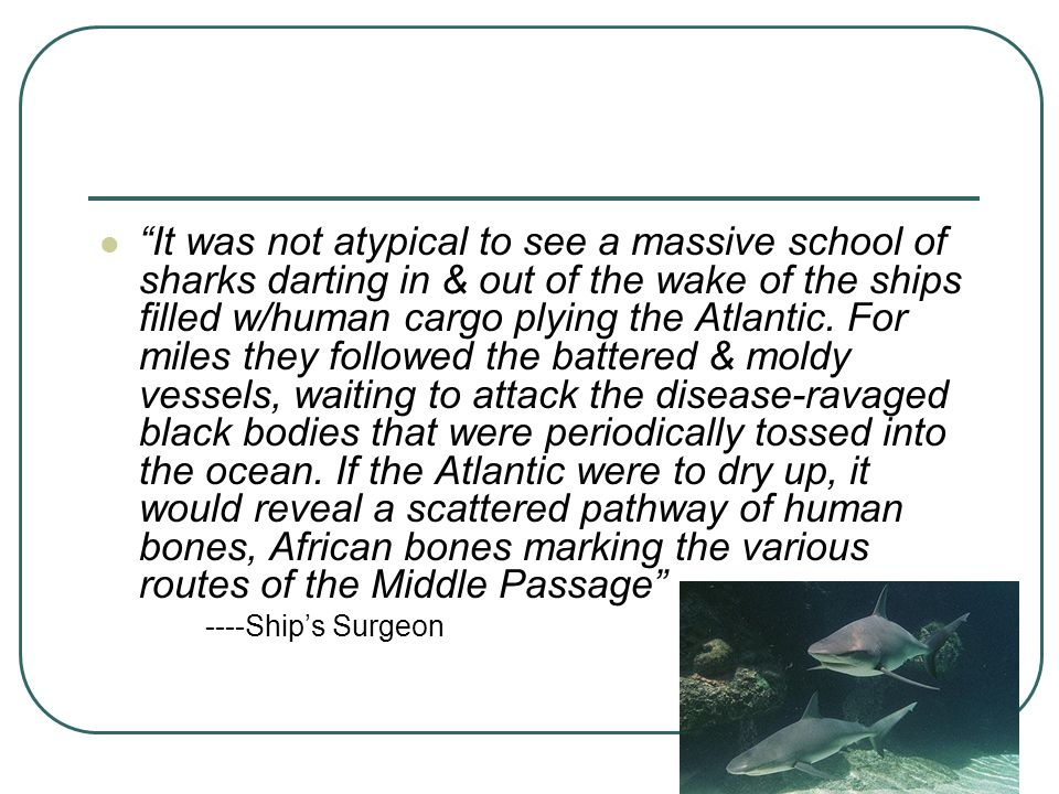 """It was not atypical to see a massive school of sharks darting in & out of the wake of the ships filled w/human cargo plying the Atlantic. For miles t"