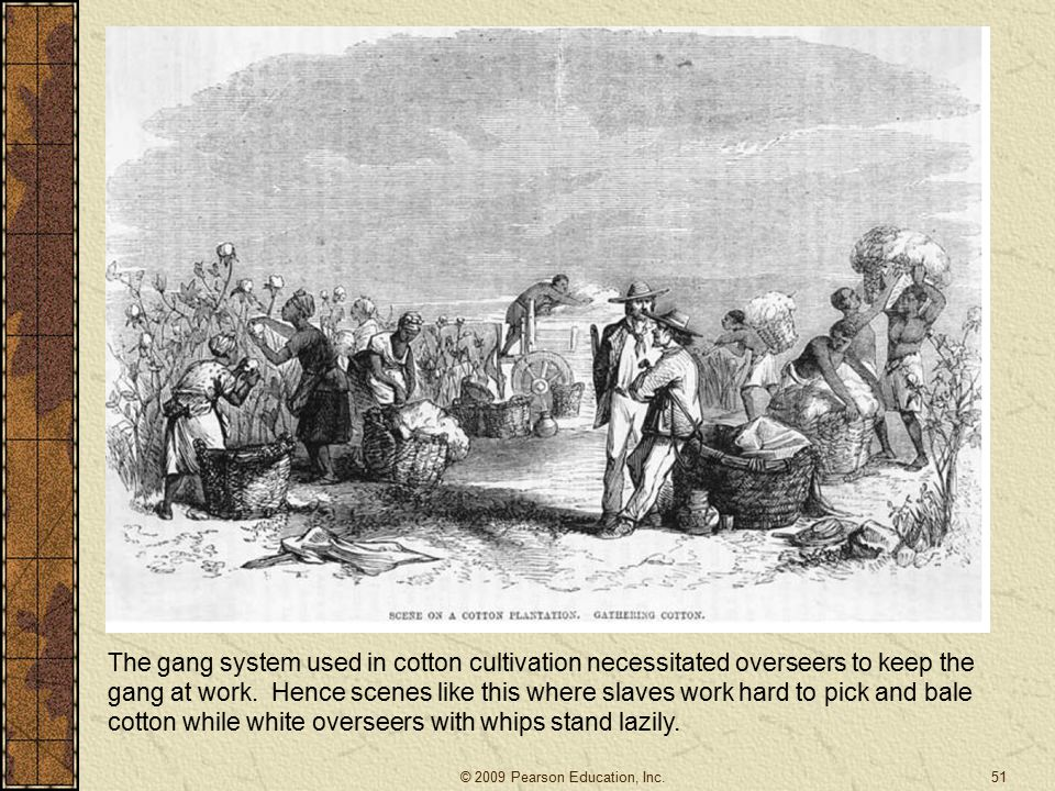 51 The gang system used in cotton cultivation necessitated overseers to keep the gang at work.