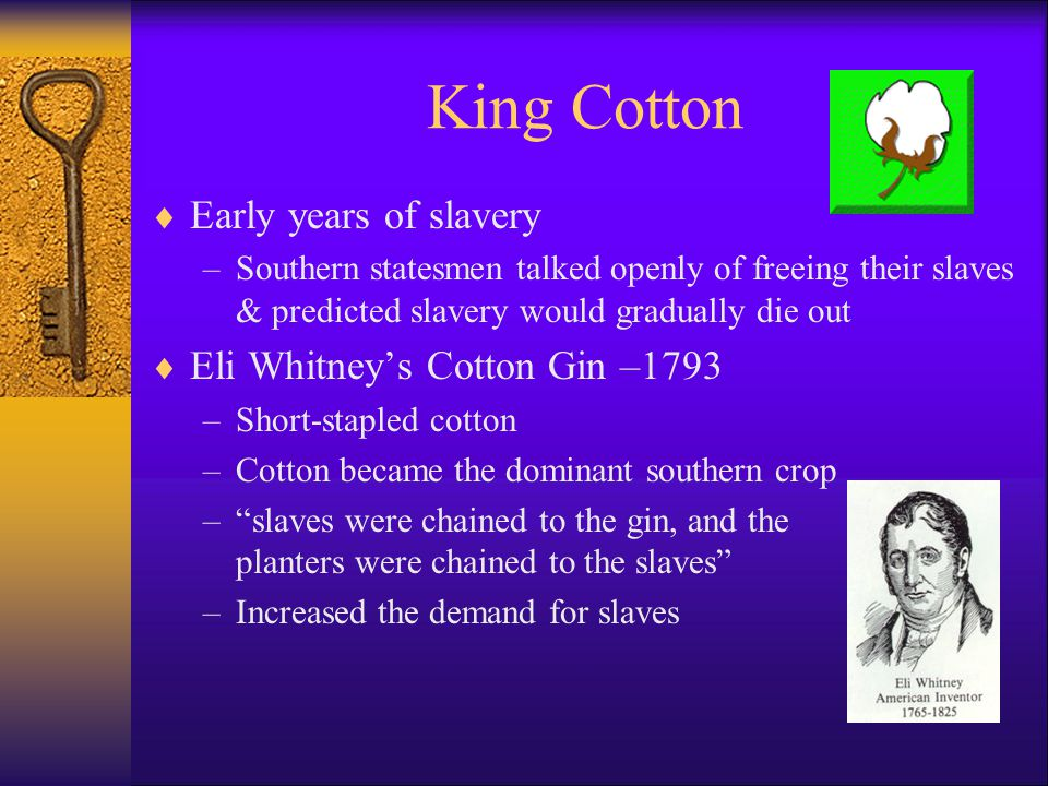 King Cotton  Early years of slavery –Southern statesmen talked openly of freeing their slaves & predicted slavery would gradually die out  Eli Whitney's Cotton Gin –1793 –Short-stapled cotton –Cotton became the dominant southern crop – slaves were chained to the gin, and the planters were chained to the slaves –Increased the demand for slaves