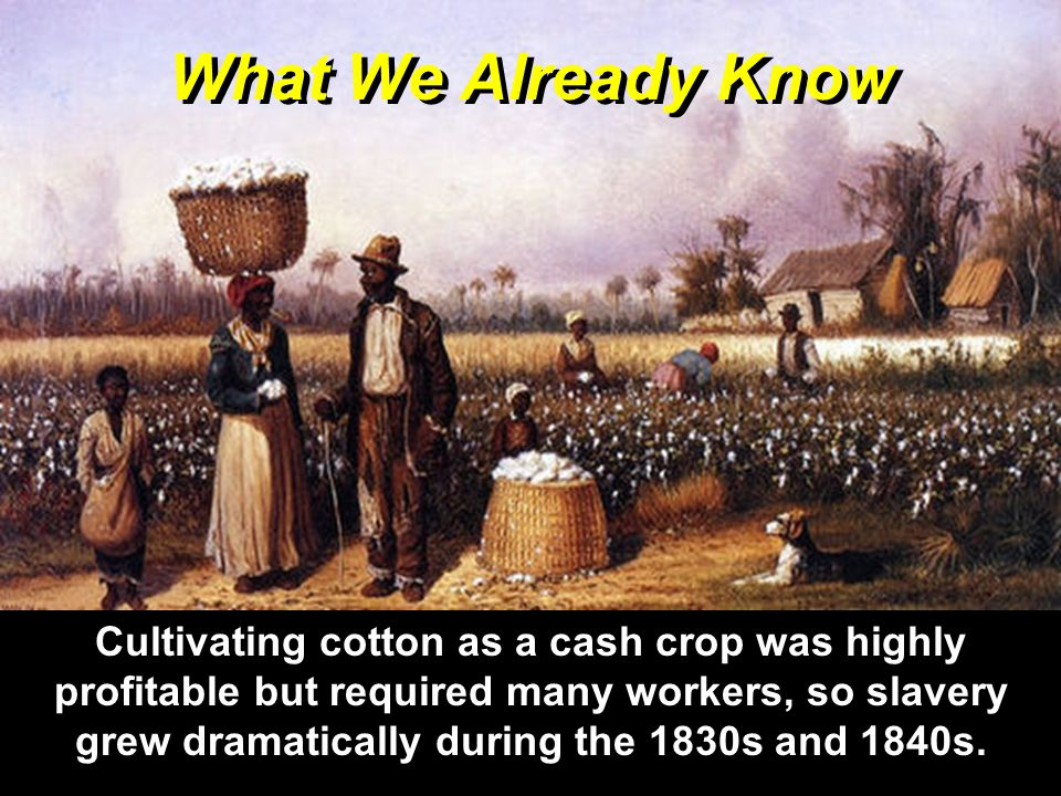 What We Already Know Cultivating cotton as a cash crop was highly profitable but required many workers, so slavery grew dramatically during the 1830s and 1840s.