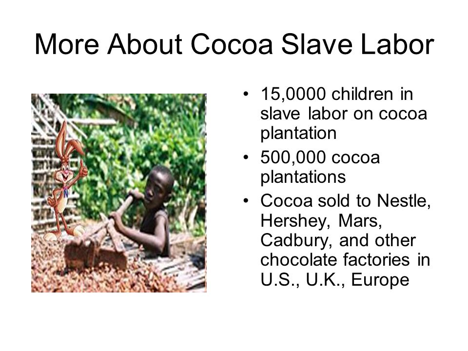 More About Cocoa Slave Labor 15,0000 children in slave labor on cocoa plantation 500,000 cocoa plantations Cocoa sold to Nestle, Hershey, Mars, Cadbury, and other chocolate factories in U.S., U.K., Europe